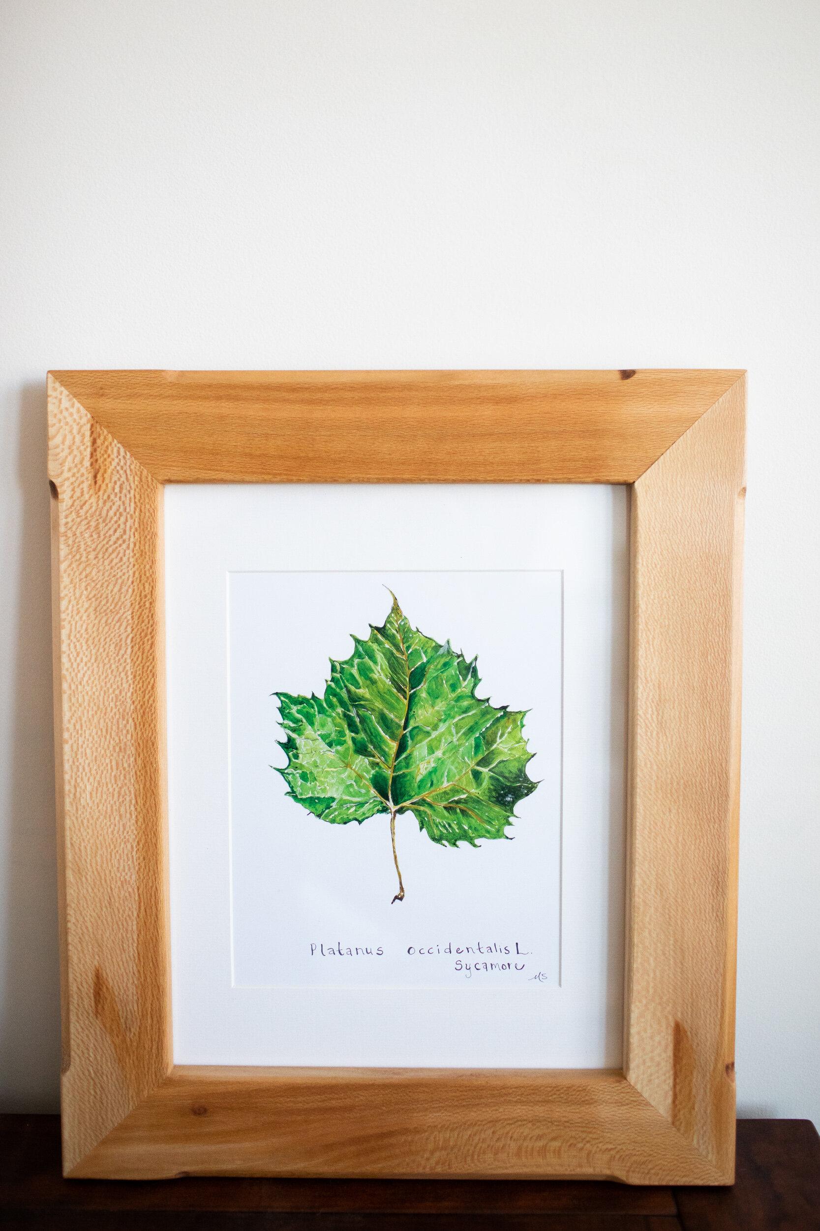 framed botanicals -1.jpg
