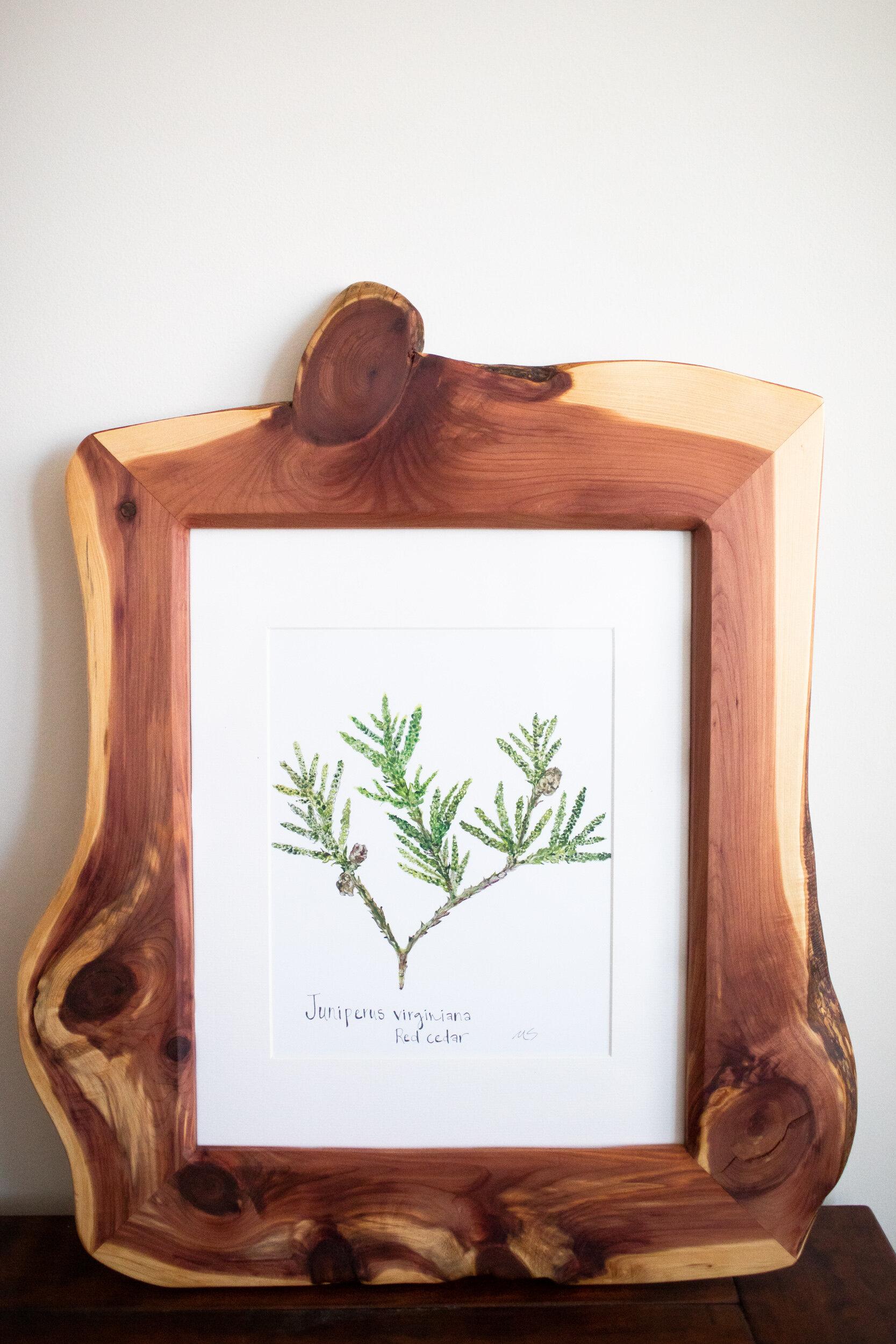 framed botanicals -14.jpg