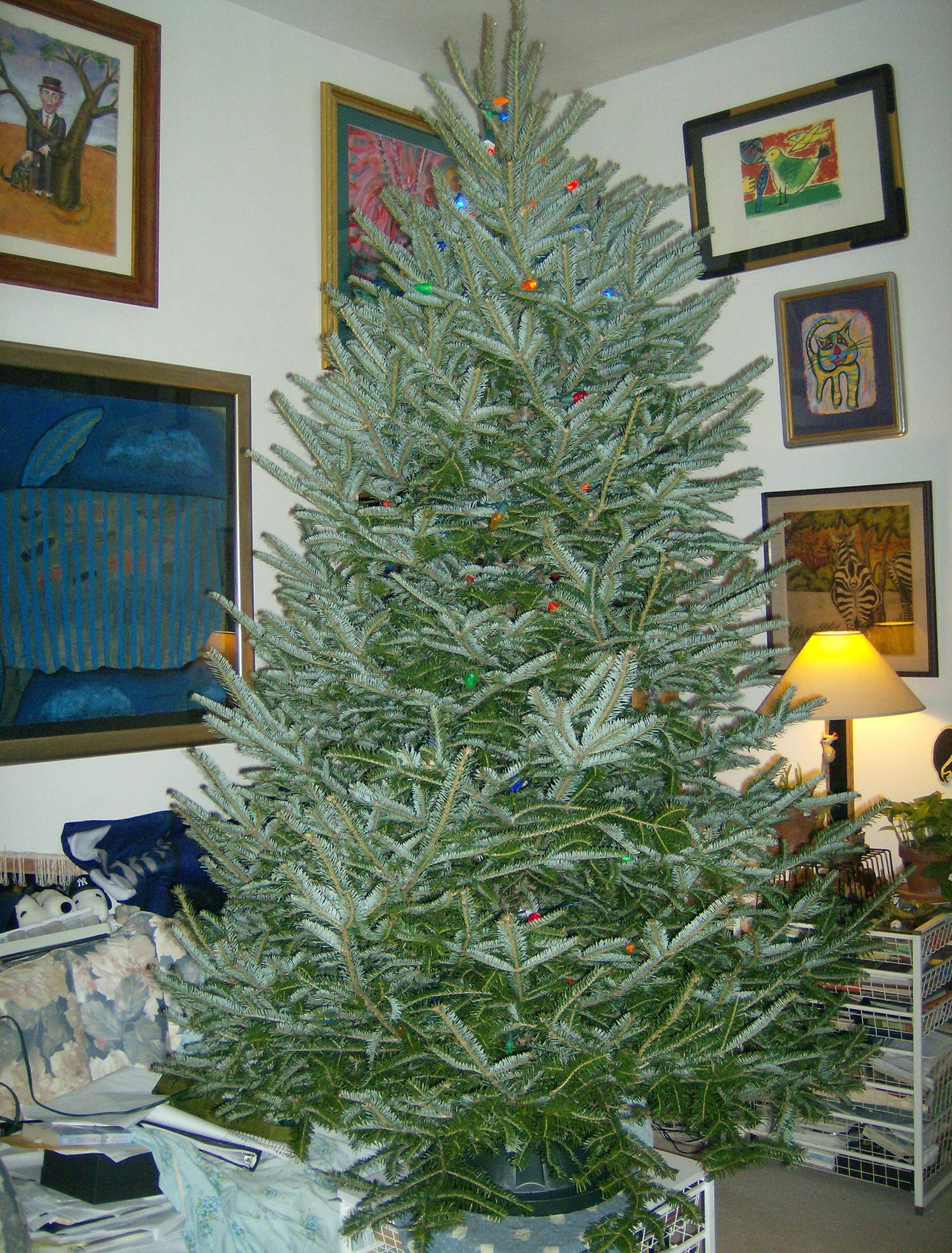 Mr. Tree gets his lights on.