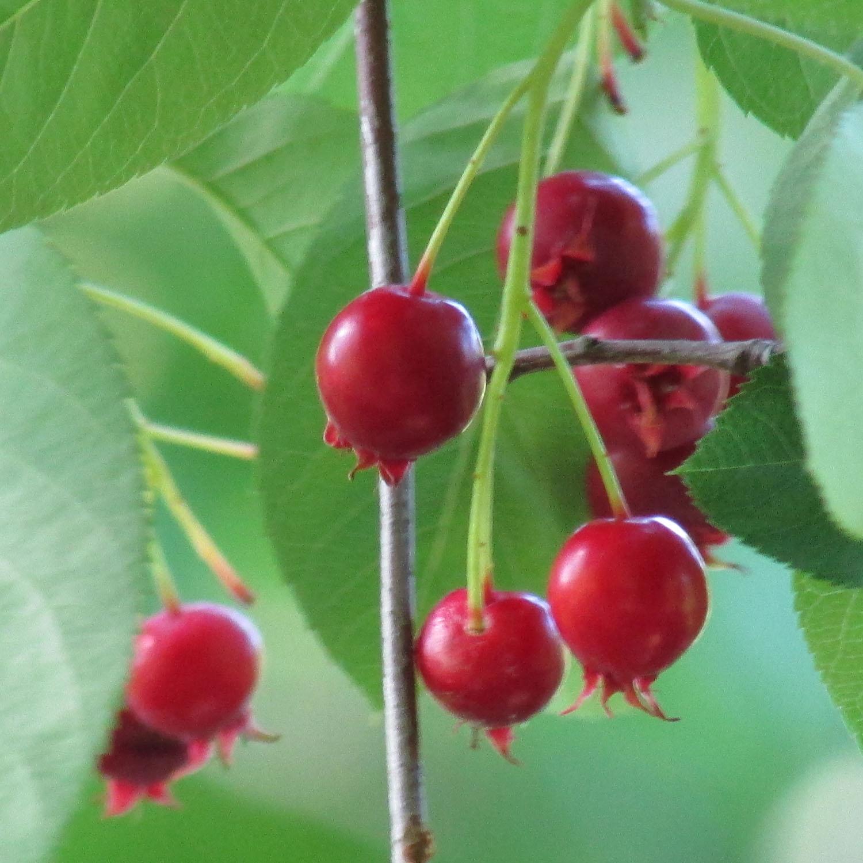 Berries 1500 6-12-2013 194.jpg