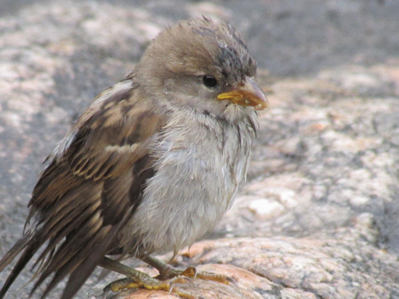 Sparrow 1500.jpg