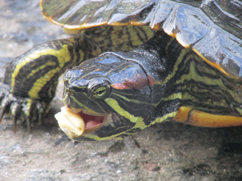 Turtle 1500.jpg