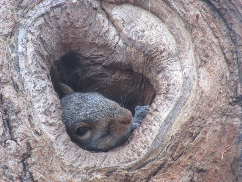 Squirrel 1500.jpg