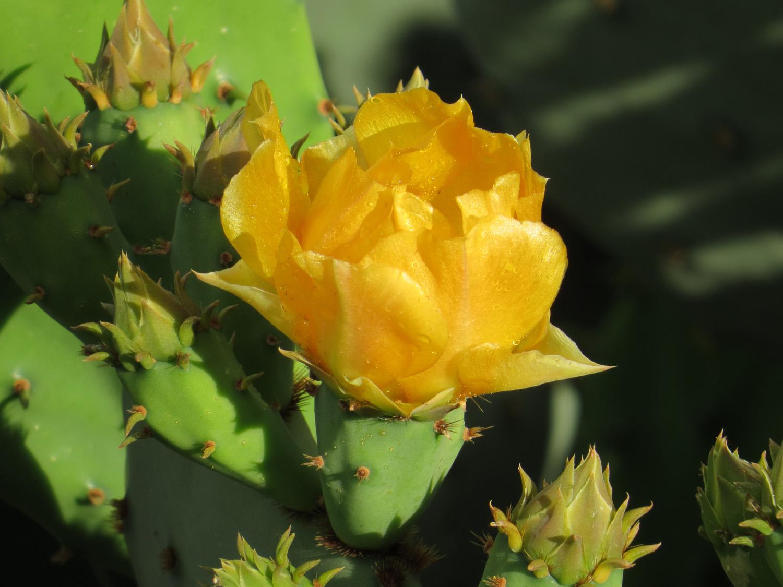 Blooming Arizona