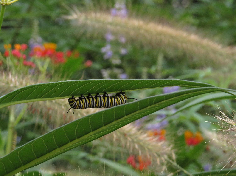 Caterpillar 1500 8-31-2016 162P.jpg