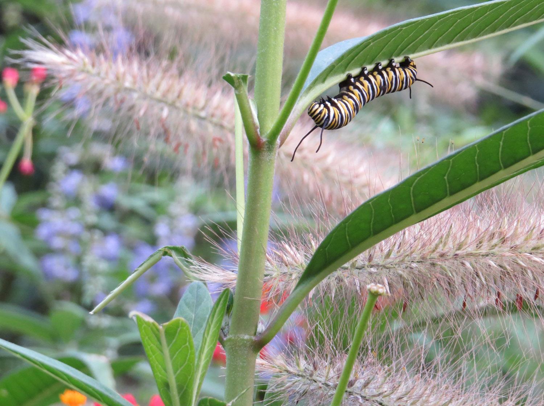 Caterpillar 1500 8-31-2016 125.jpg