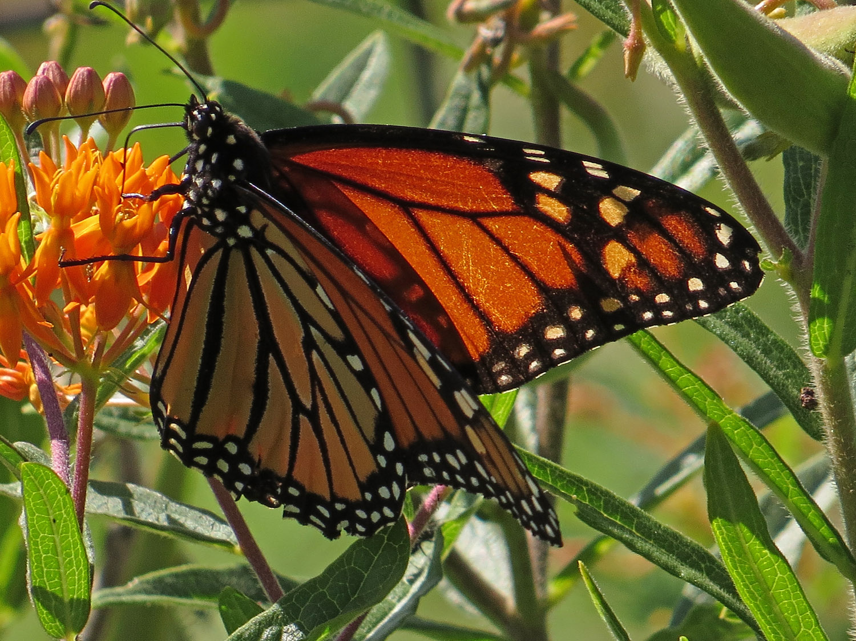 Butterfly 1500 8-30-2016 011P.jpg