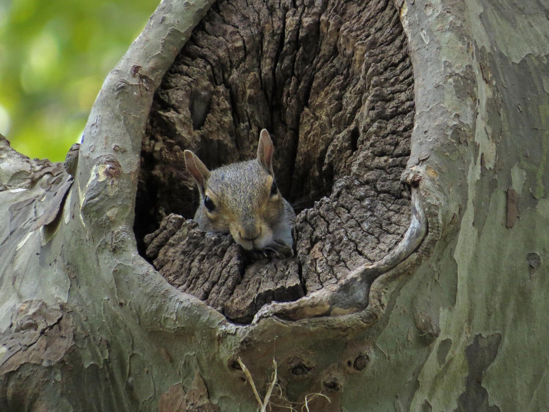 Squirrel 1500 9-4-2016 063P.jpg