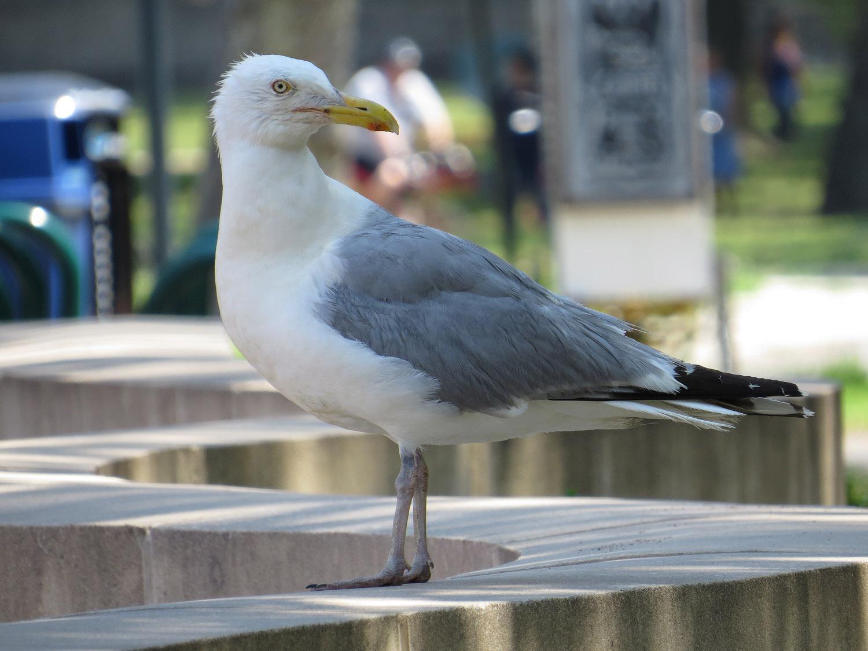 Gull 1500 7-17-2016 168P.jpg
