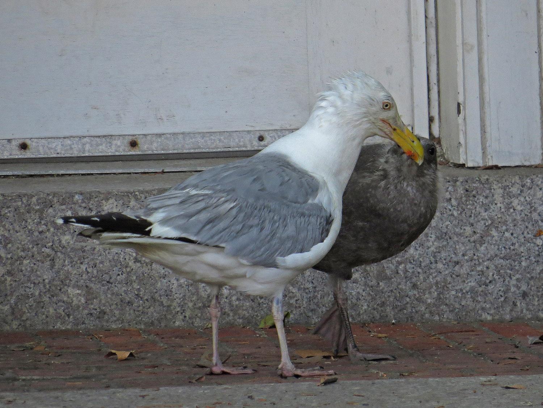 Gull 1500 7-17-2016 172P.jpg