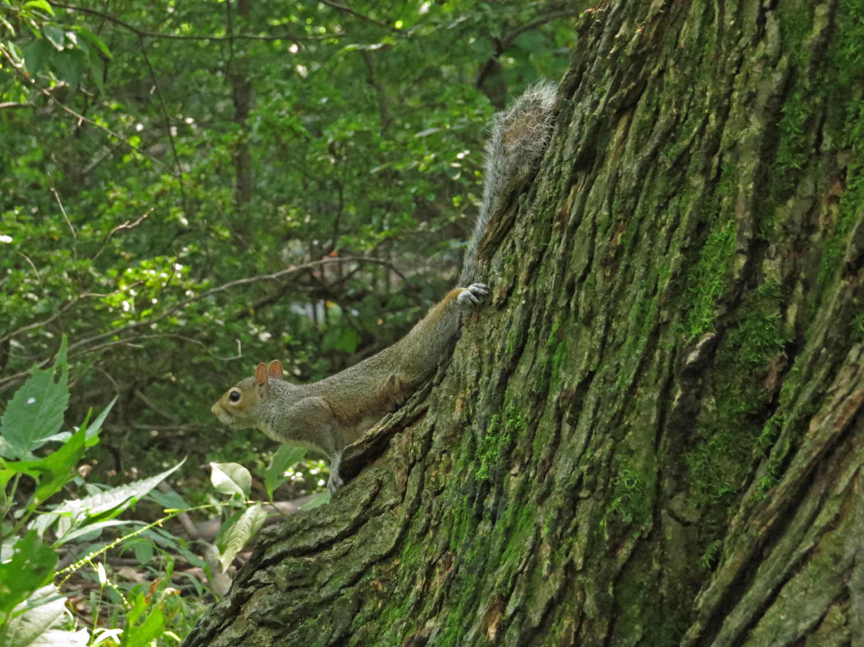Squirrel 1500 9-10-2016 078P.jpg