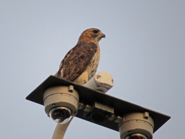 Hawk 1500 9-23-2016 110P.jpg