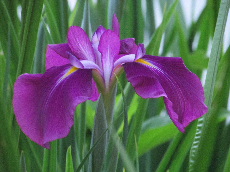 Iris 1500 6-10-2014 192.jpg