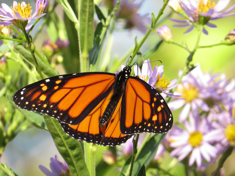 Monarch 1500 10-12-2016 071P.jpg