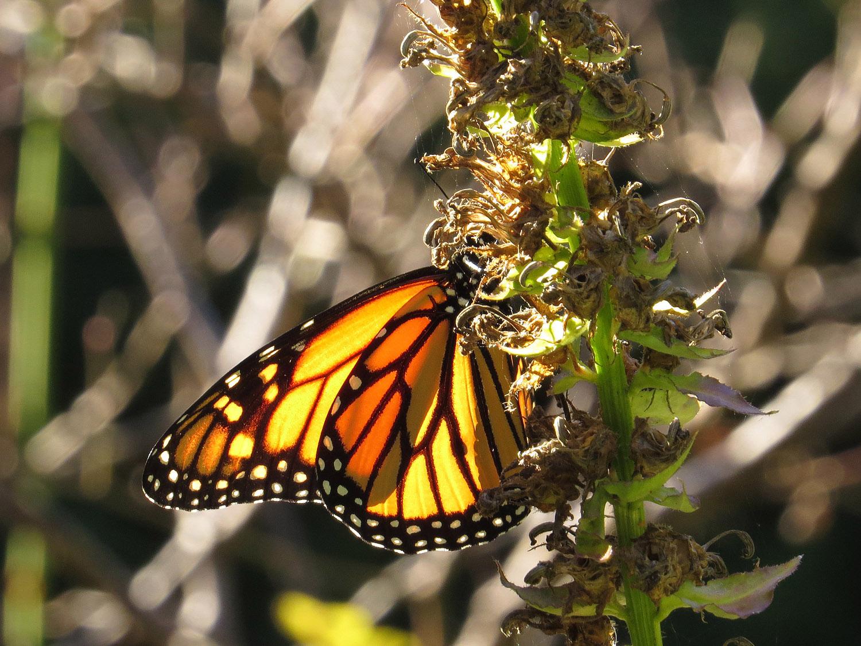 Monarch 1500 10-12-2016 032P.jpg