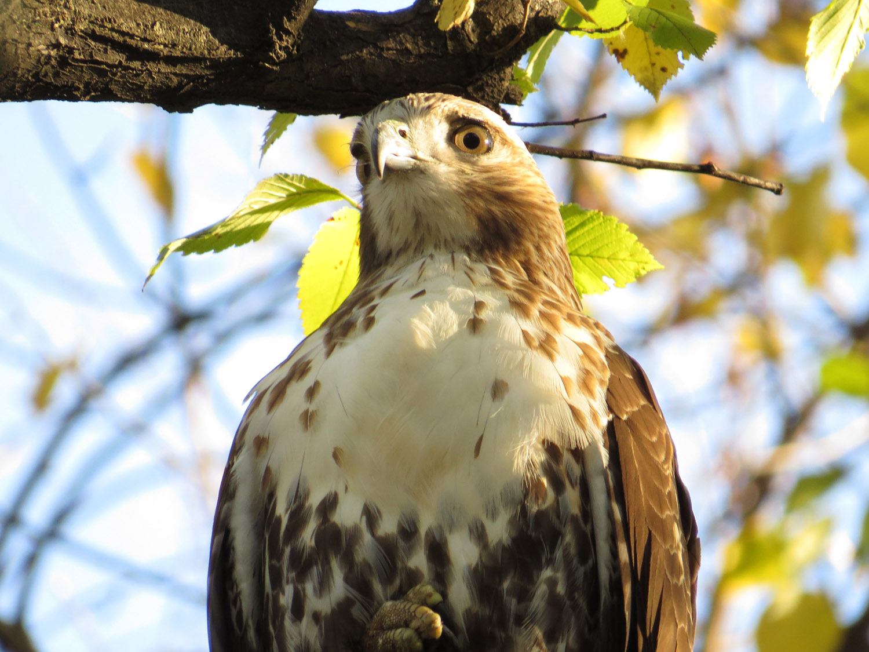Hawk 1500 10-23-2016 014P.jpg