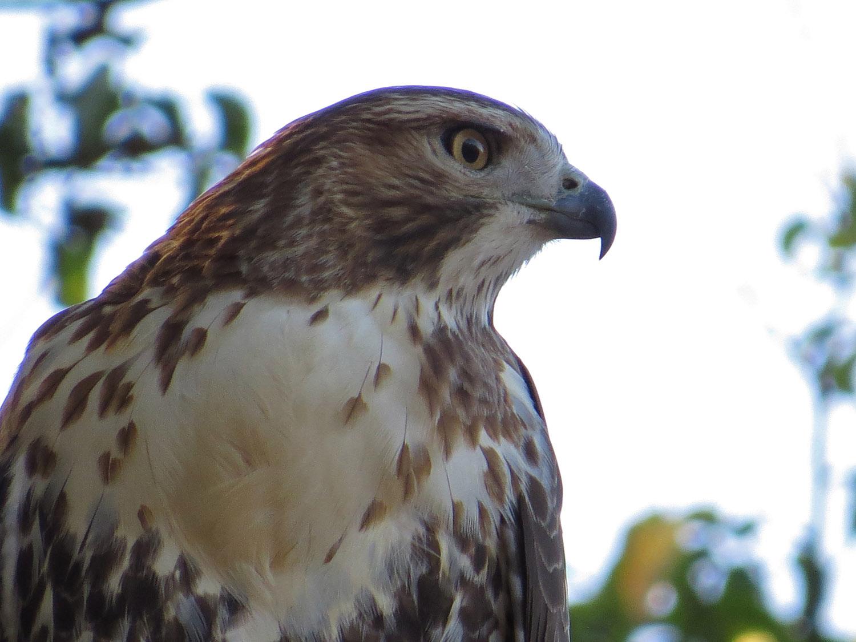 Hawk 1500 10-23-2016 045P.jpg