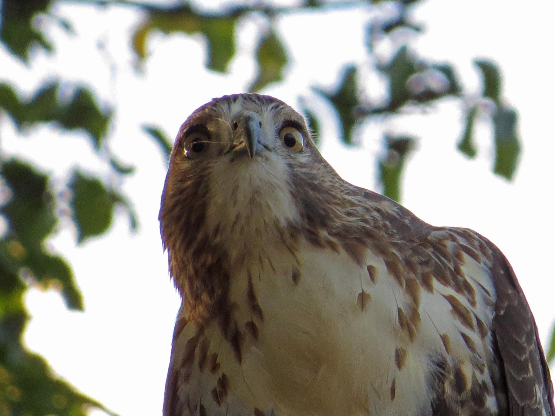 Hawk 1500 10-23-2016 052P.jpg