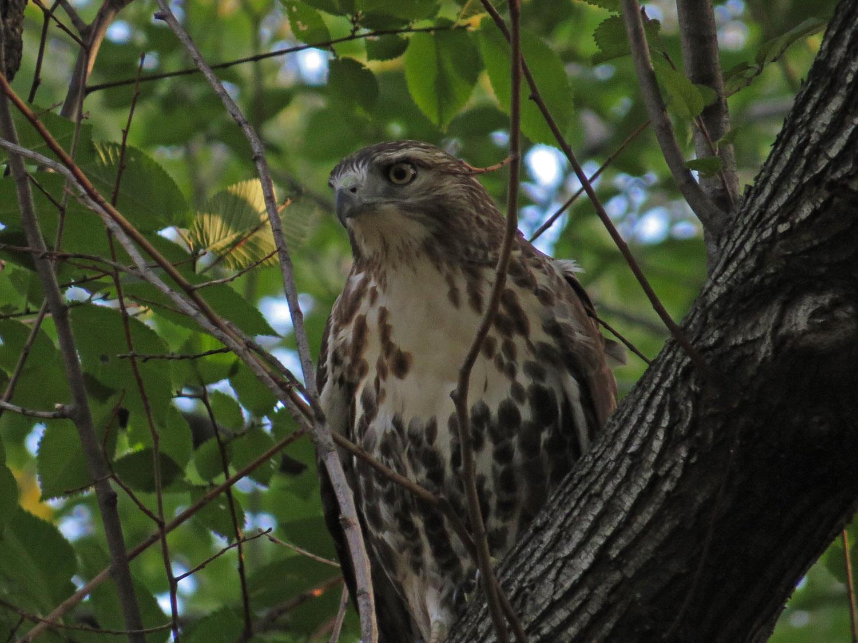 Hawk 1500 10-23-2016 090P.jpg