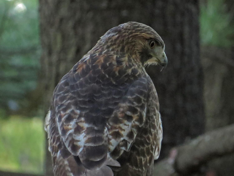 Hawk 1500 10-28-2016 042P.jpg