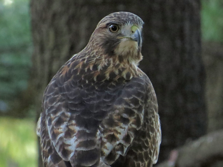 Hawk 1500 10-28-2016 045P.jpg