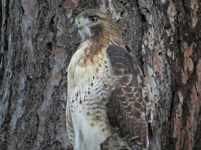 Hawk 1500 10-28-2016 058P.jpg