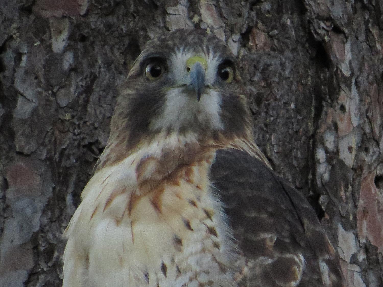 Hawk 1500 10-28-2016 061P.jpg