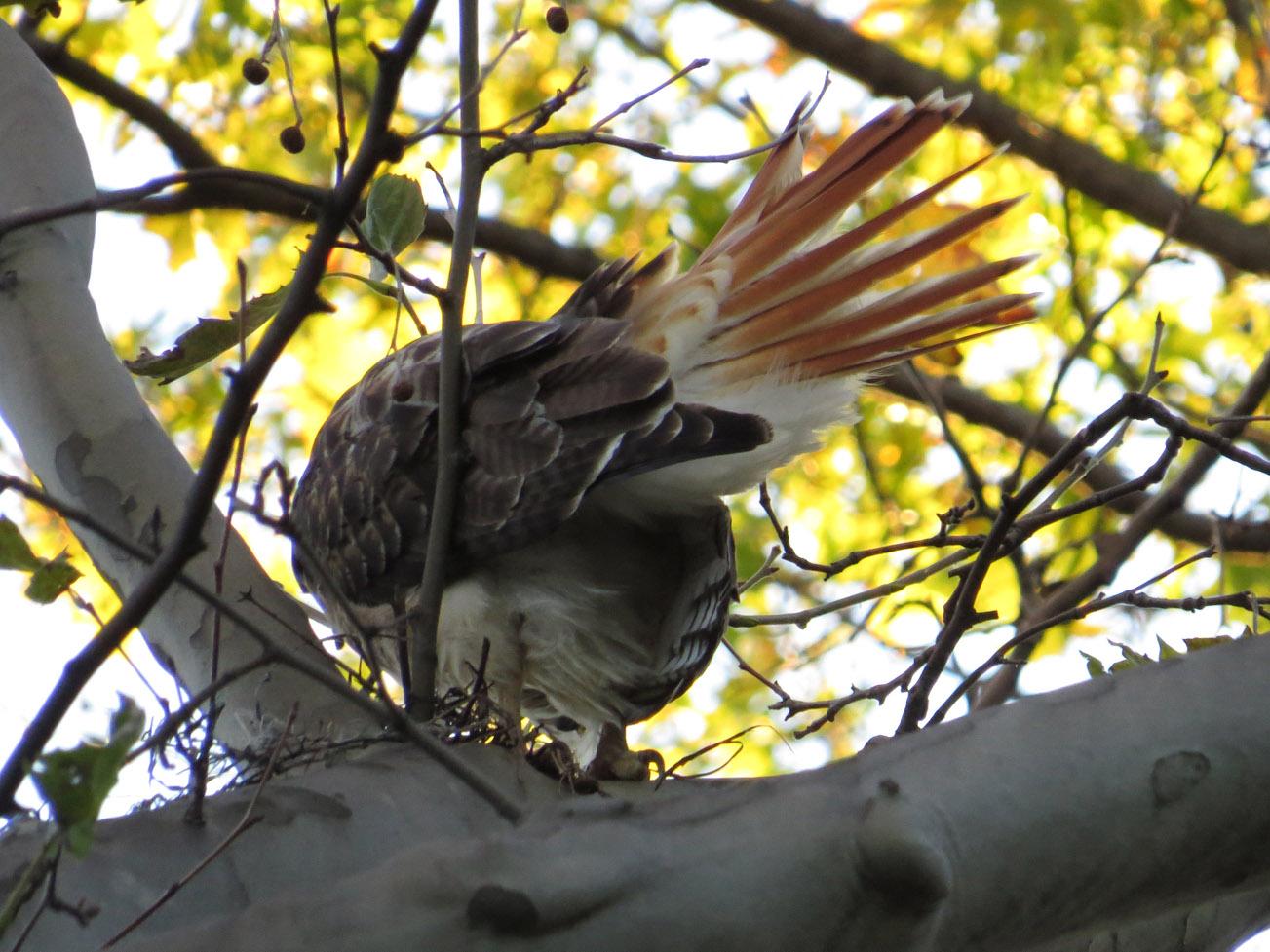 Hawk 1500 10-28-2016 010P.jpg