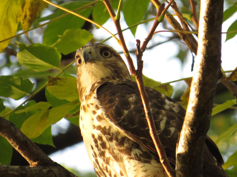 Hawk 1500 11-2-2016 115P.jpg