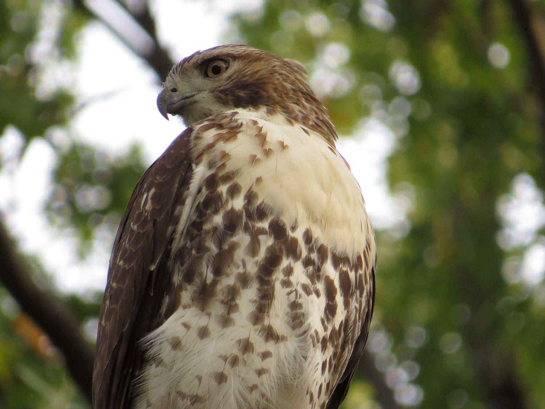 Hawk 1500 10-26-2016 064P.jpg