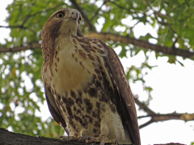 Hawk 1500 10-26-2016 074P.jpg
