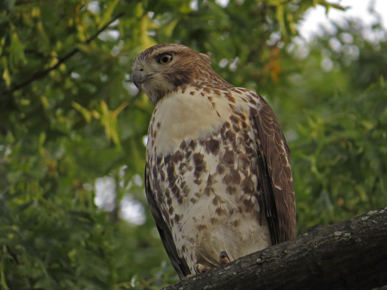 Hawk 1500 10-26-2016 093P.jpg