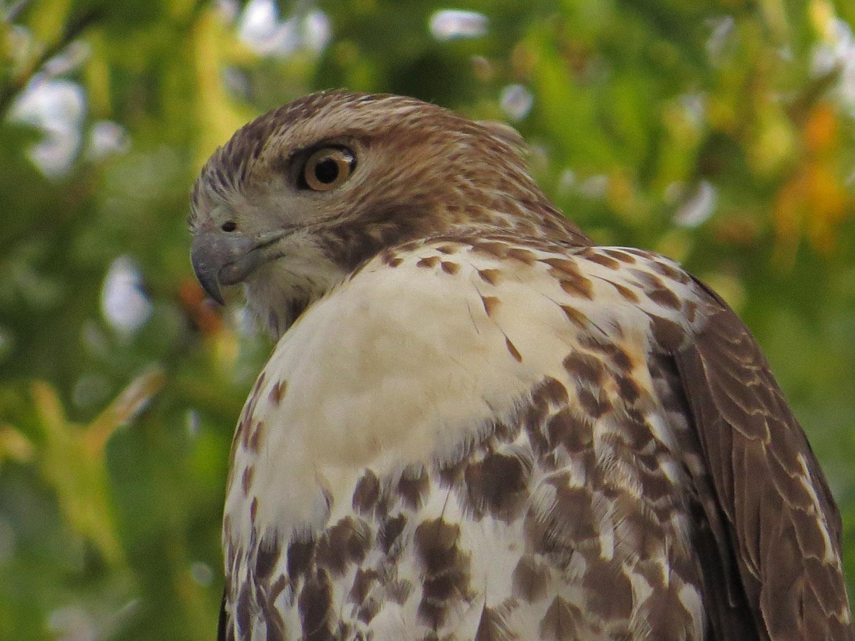 Hawk 1500 10-26-2016 104P.jpg