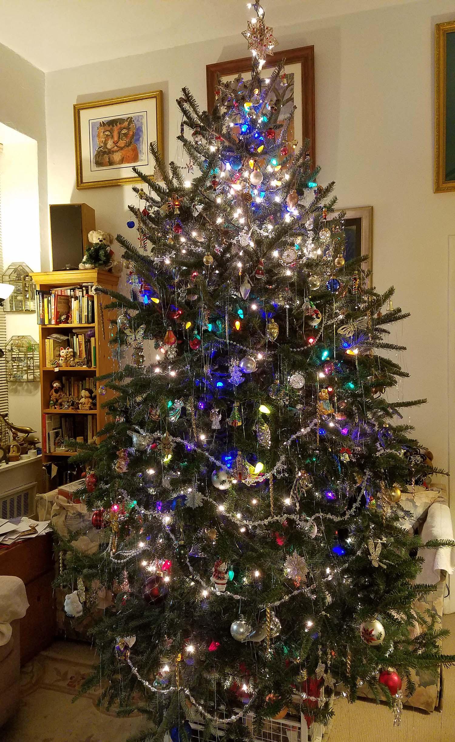 Hillary, the Hovel Tree, Christmas 2016