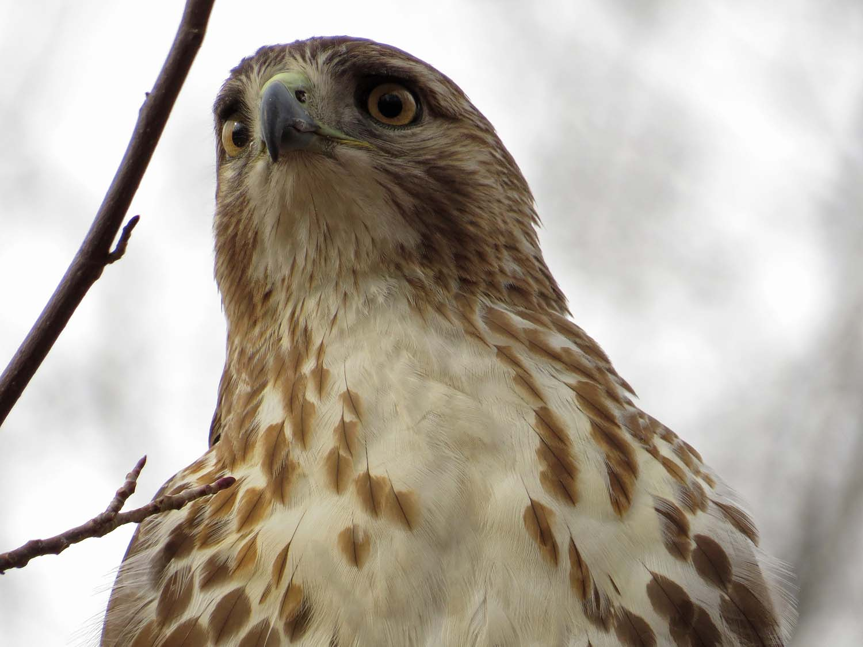 Hawk 1500 3-1-2017 025P.jpg