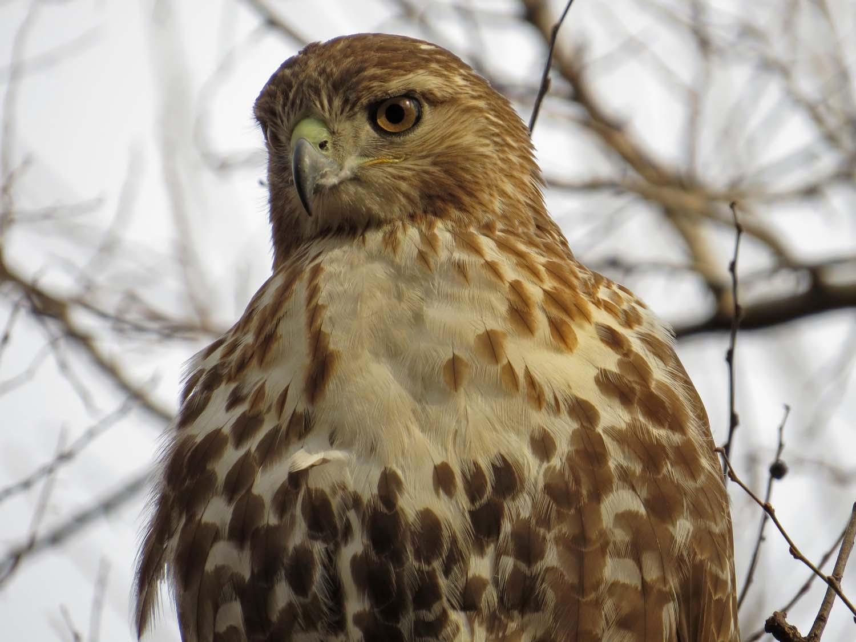 Hawk 1500 3-1-2017 033P.jpg