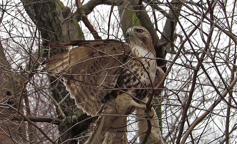 Hawk 1500 3-1-2017 113AP.jpg