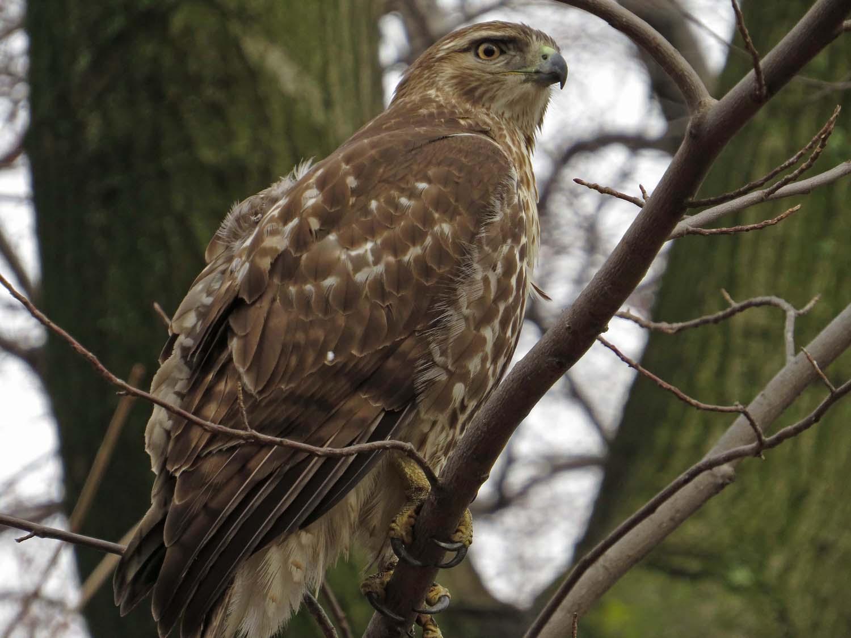 Hawk 1500 3-1-2017 015P.jpg