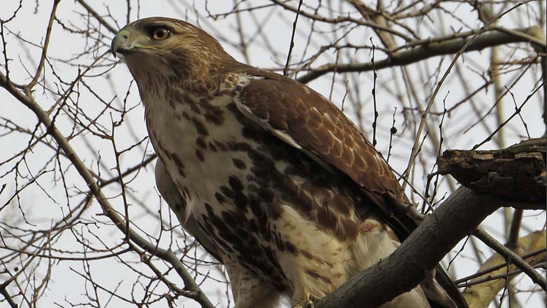 Hawk 1500 3-1-2017 38B.jpg
