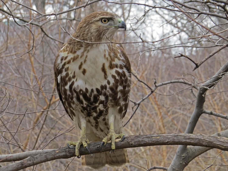 Hawk 1500 3-1-2017 101P.jpg