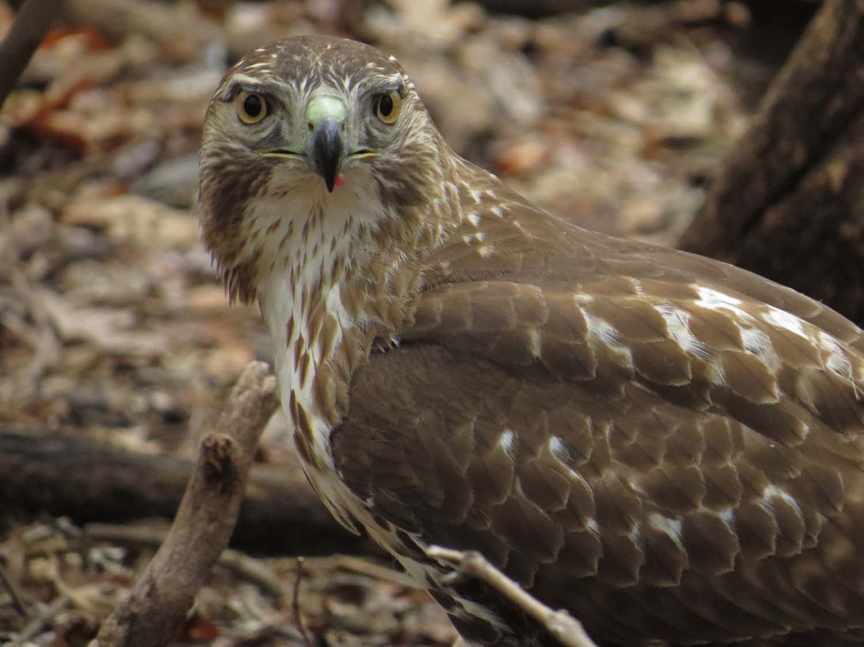 Hawk 1500 3-1-2017 146P.jpg