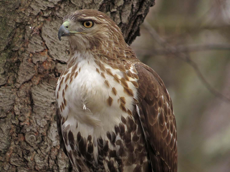 Hawk 1500 3-1-2017 263P.jpg