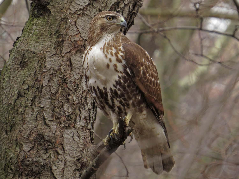 Hawk 1500 3-1-2017 270P.jpg
