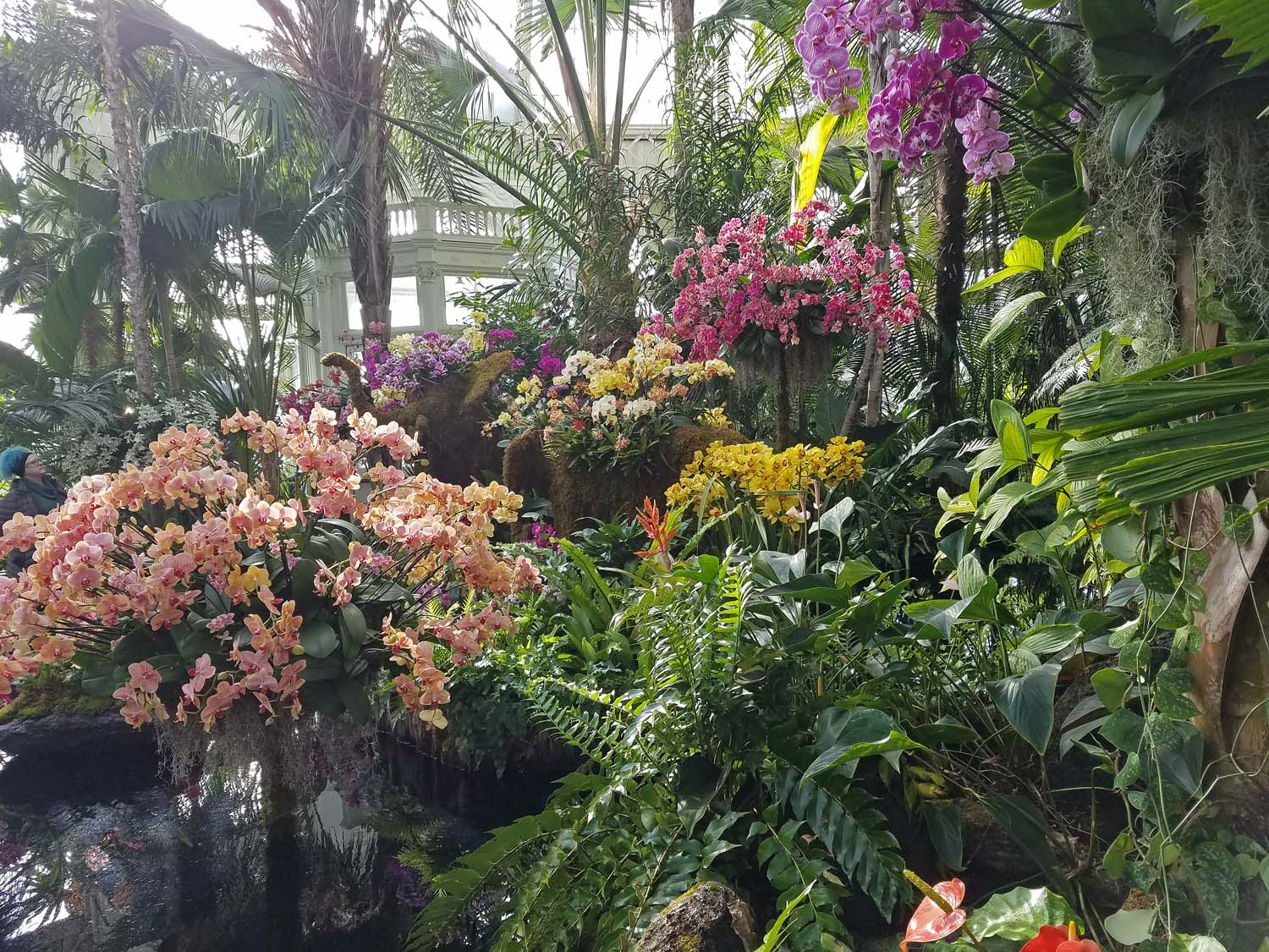 The Orchid Show: Thailand at the New York Botanical Garden, Bronx, New York