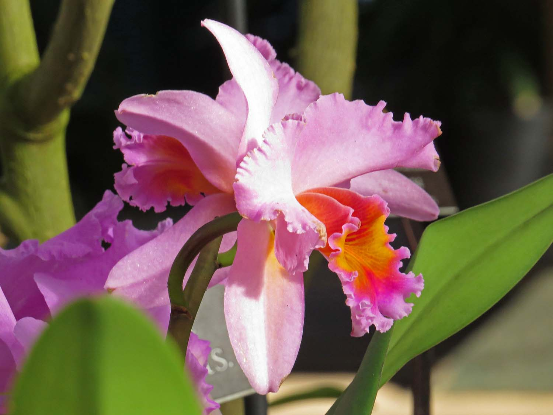 Orchid 1500 3-12-2017 148P.jpg