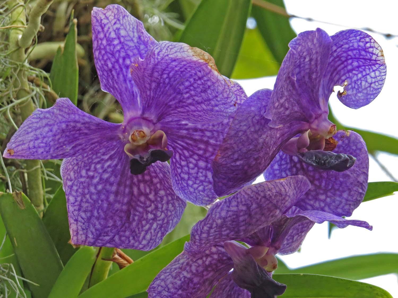 Orchid 1500 3-12-2017 206P.jpg