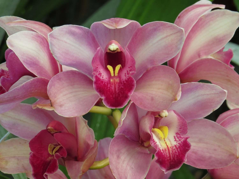 Orchid 1500 3-29-2017 143P.jpg