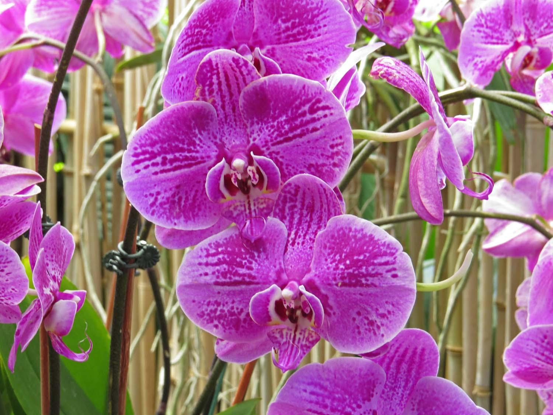 Orchid 1500 3-29-2017 149P.jpg