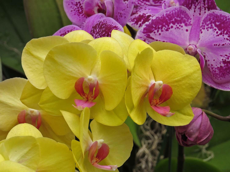 Orchid 1500 3-29-2017 159P.jpg