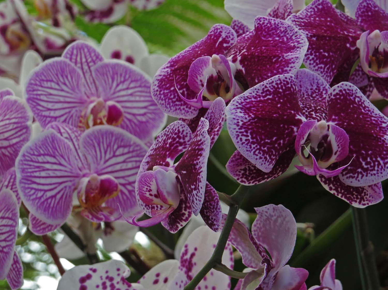 Orchid 1500 3-29-2017 167P.jpg